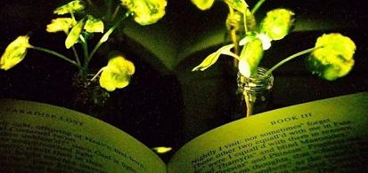 将来、光る植物が街灯として植えられるかもしれない?!