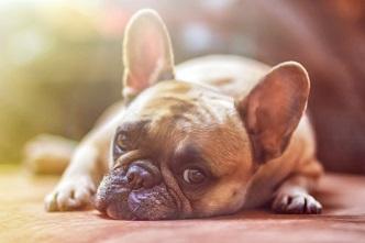 ペット愛好家に朗報!10年以内に犬や猫の言葉が分かる通訳機器が一般販売されるかも?!