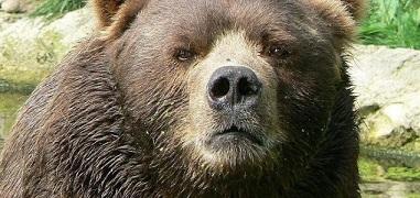 迷子の3歳児!熊に守ってもらっていたと証言?!