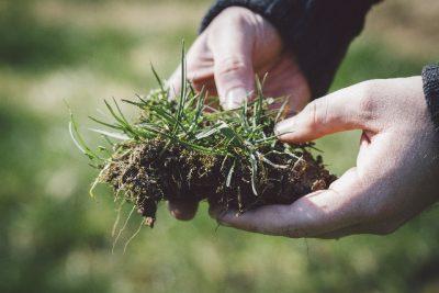 絶対に植えてはいけない植物たち…