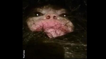 ビッグフットの子供?毛むくじゃらの生物をアゼルバイジャンで捕獲