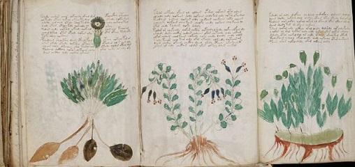 ヴォイニッチ手稿の謎、ある歴史学者により明らかとなる?!