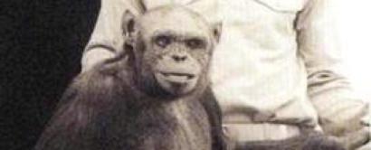ヒトとチンパンジーの交雑種「ヒューマンジー」が米研究所で100年前に作られていた?!