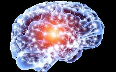 脳は一生成長する!年配者でも10代と同数の新神経細胞を持つことを科学者らが発見