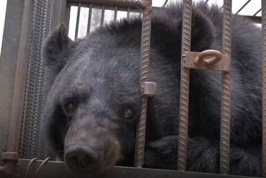 【そんなバカな?!】飼い犬が実は熊だったことに2年間気付かなかった中国人家族