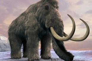 先史動物のマンモス、クローン技術により10年以内に復活か!