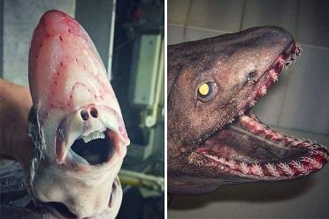 北極海のトワイライト・ゾーンと呼ばれる深海で網に掛かった不思議な海の怪物たち