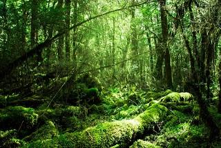 【母なる森が深呼吸?!】カナダ・ケベックの森で見られた珍現象
